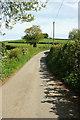 SX8180 : Furzeleigh Lane by Derek Harper