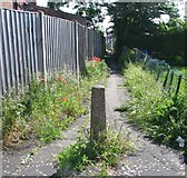 TG2407 : Poppies flowering by Hardy Road by Evelyn Simak