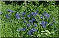 SK6614 : Brilliant blue by the wayside by Alan Murray-Rust
