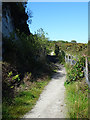 SX0255 : Path to Carluddon by Anne Burgess