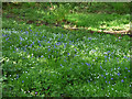 SE2641 : Buebells and daisies, Breary Marsh SSSI by Stephen Craven