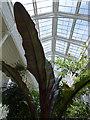 SJ7481 : Tatton Park gardens - orangery (interior) by Stephen Craven