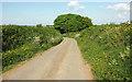 SS4410 : Lane to Pennicknold by Derek Harper