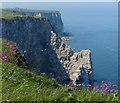 TA2073 : Scale Nab at the Bempton Cliffs by Mat Fascione