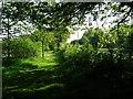 SJ5329 : Periphery path, Lower Lacon campsite by Philip Halling