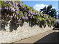 SU9747 : Loseley House - Wisteria-covered wall by Rob Farrow