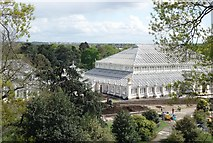 TQ1876 : The Temperate House, Kew Gardens by Peter Jeffery