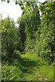 SX4766 : Path, Buckland Abbey Estate by Derek Harper