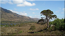 NH1521 : Beside the Affric Kintail Way by Julian Paren