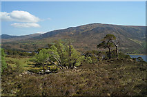 NH1422 : Trees by Allt Coire Leachavie by Julian Paren