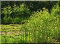 SX7977 : Bracken, Lower Brimley by Derek Harper