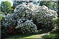 SO2856 : Rhododendrons at Hergest Croft Gardens by Philip Halling