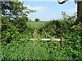 SK1632 : Overgrown footbridge by Ian Calderwood