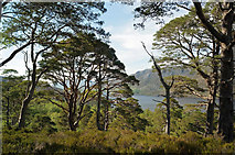 NG9964 : On the combined Mountain and Woodland Trail by Julian Paren