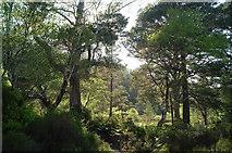 NH0064 : Beside the Woodland Trail, Beinn Eighe Reserve by Julian Paren
