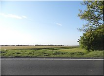 TL2760 : Field by Cambridge Road near Papworth Everard by David Howard