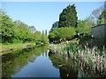 SJ9601 : Overflow weir, Wyrley & Essington Canal by Christine Johnstone