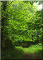 SX9381 : A walk in the Black Forest by Derek Harper