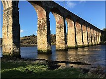 NT9953 : The Royal Border Bridge at Berwick on Tweed by Jennifer Petrie