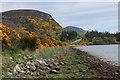 NH7797 : Below the Mound by Loch Fleet by Chris Heaton