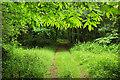 SX9381 : Chestnut leaves, Black Forest by Derek Harper