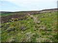 SE0127 : Moorland path, Wadsworth by Humphrey Bolton