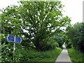 TQ5805 : The Cuckoo Trail Signpost by PAUL FARMER
