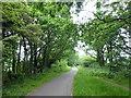 TQ5807 : Cuckoo Trail by PAUL FARMER