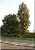 SO9393 : Trees on Birmingham New Road, Roseville by David Howard