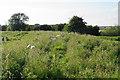 SO8636 : Sheep in the long grass by Bill Boaden