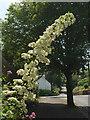 SX9063 : Flowering bush, Chelston by Derek Harper