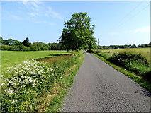 H4965 : Rarone Road, Rarone / Moylagh by Kenneth  Allen