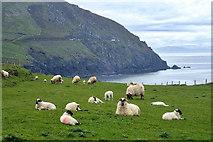 V3198 : Pasture near Coumeenoole by Mick Garratt