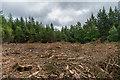 TQ0849 : Tree felling by Ian Capper
