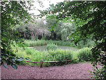 TQ2479 : Pool in wildlife enclosure, Holland Park rainwater conservation by David Hawgood