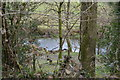 SX5264 : River Meavy by N Chadwick