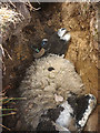 NY8608 : Sheep in a crevice, Potter Sike (2) by Karl and Ali