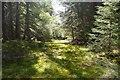 NN5959 : Track on Aulich Hill by Richard Webb