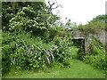 TQ7942 : Looking through to the walled garden at Iden Croft Herbs by Marathon
