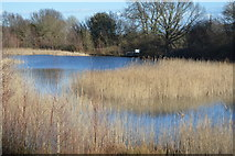 TR3453 : Lake, Betteshanger Country Park by N Chadwick