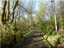 NN1127 : Track through the woods at Lochawe by Alpin Stewart