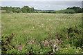 NS7477 : Rough grassland by Richard Sutcliffe