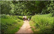 SX8963 : Path through Cockington Meadows by Derek Harper