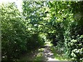 TQ0977 : Woodland path in Cranford Countryside Park by Marathon