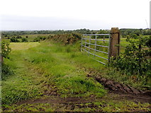 H5672 : An open field, Mullaghslin Glebe by Kenneth  Allen