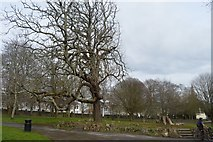 SX4854 : Beaumont Park by N Chadwick