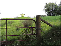 H5572 : Scarecrow, Mullaghslin Glebe by Kenneth  Allen