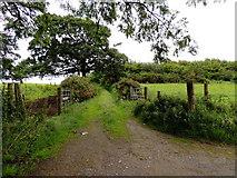 H5672 : Grassy lane, Mullaghslin Glebe by Kenneth  Allen