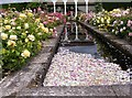 SJ7904 : Rose Petals by Gordon Griffiths