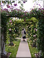 SJ7904 : Rose Arches by Gordon Griffiths